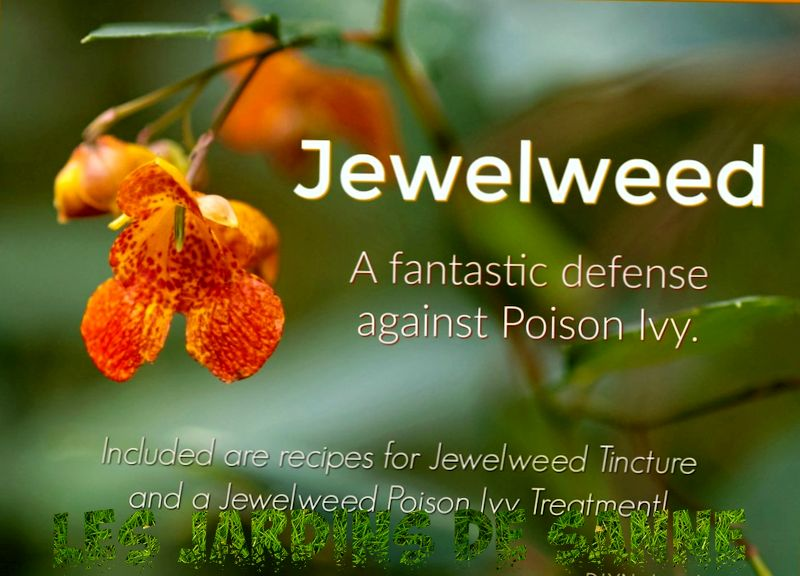 Jewelweed Plant Care - Tipps für den Anbau wilder Jewelweed Impatiens