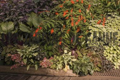 Tropical Shade Gardening Ideas - So erstellen Sie einen Tropical Shade Garden